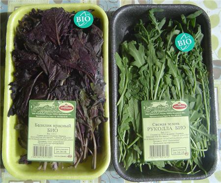 Биозелень: руккола и базилик