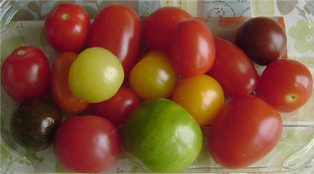 Дикие помидоры